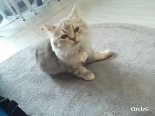 CIRCLEG CAT CAFE 貓貓地 香港 旺角 COOKING HEYHEY (8)