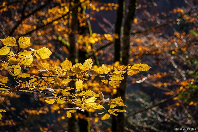Hojas doradas por la luz del sol.