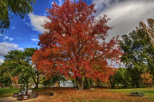 Autumn at Myrtleford