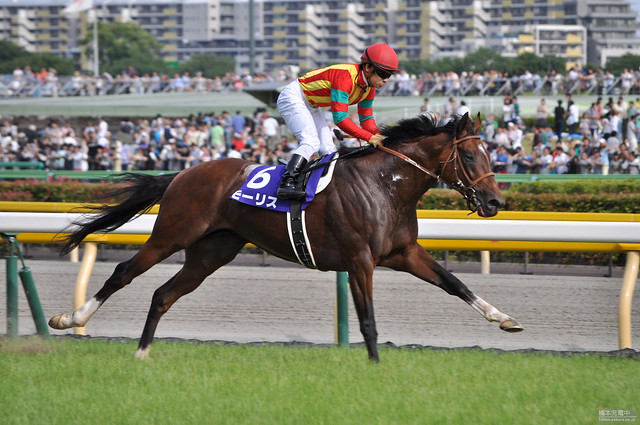 11R 安田記念 モーリス  Maurice - THE 65TH YASUDA KINEN (GI)