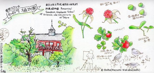 2015_05_17_koishikawa_01_s
