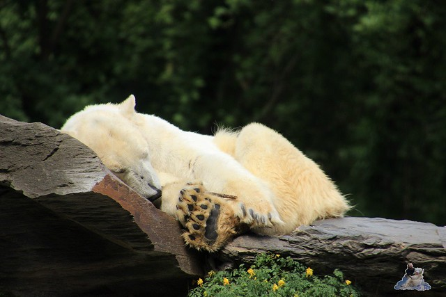Tierpark Berlin 30.05.2015  255