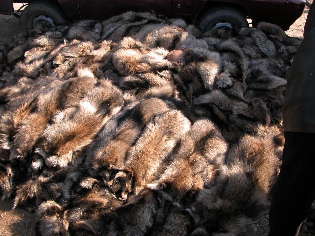 中国毛皮産業の実態 | © EAST In...