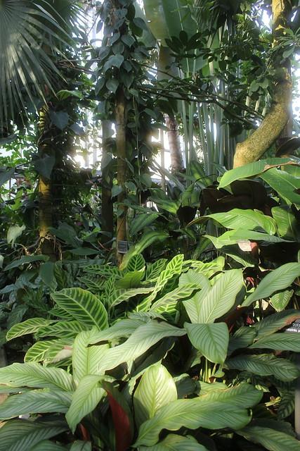 Jungle room ほっかほかジャングル・ルーム