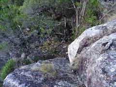 Sur un promontoire rocheux au-dessus du parking du Cavu : la descente du promontoire