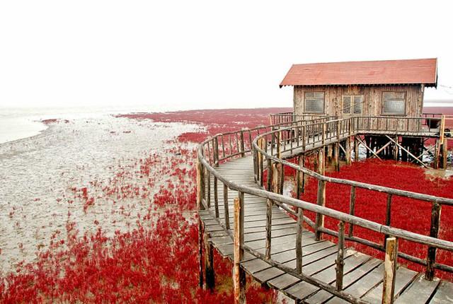 panjin-red-beach-china-10