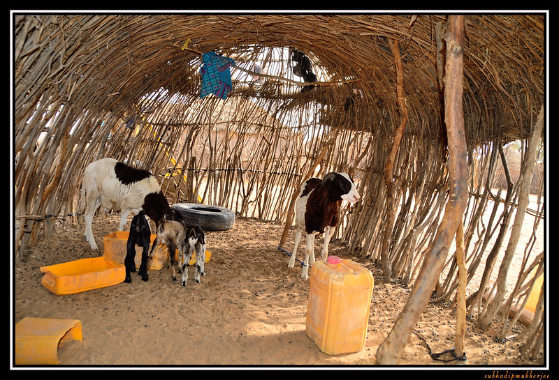 Goat Enclosure