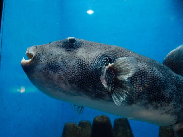 160810_takeshima_aquarium-14