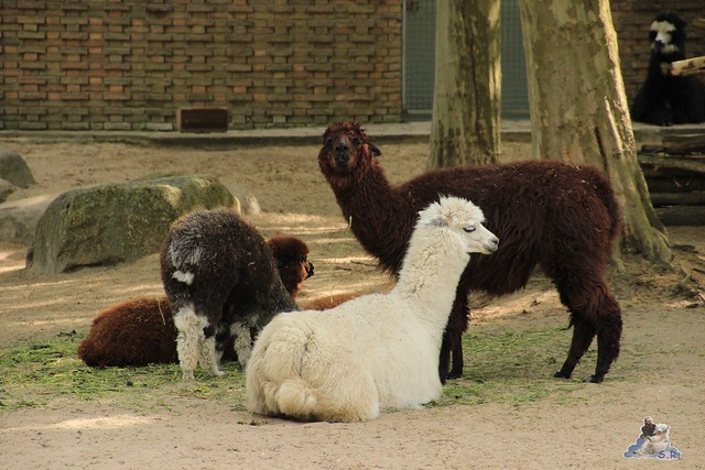 Zoo Berlin 19.05.2015  2