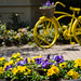 The Geneva Yellow Bike