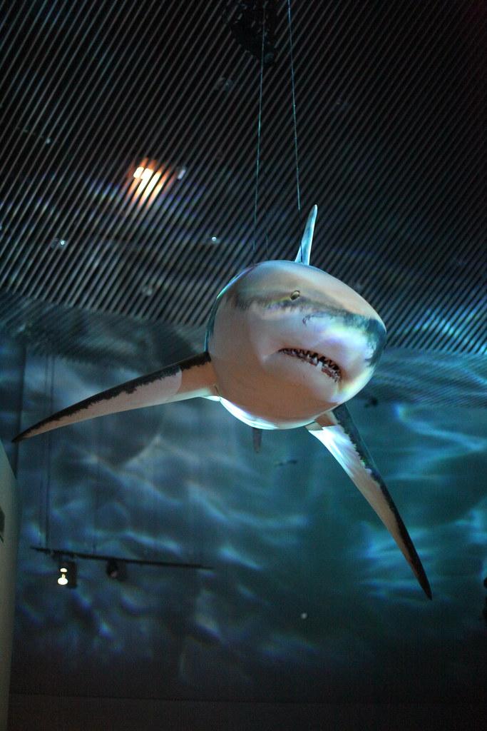 Not a real shark
