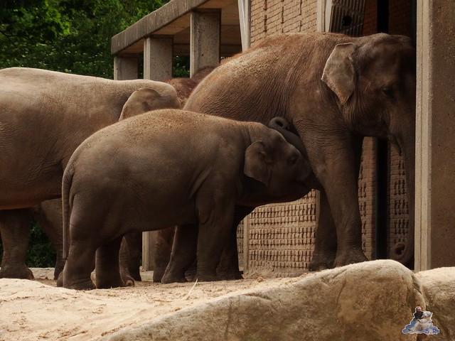 Zoo Berlin 09.06.2015  4