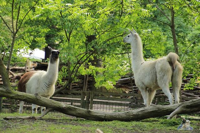 Zoo Berlin 13.05.2015  43