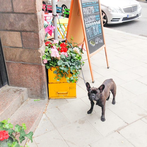 dogs on the town, stockholm, june 2015