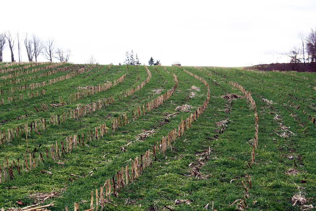 Image result for cover crops