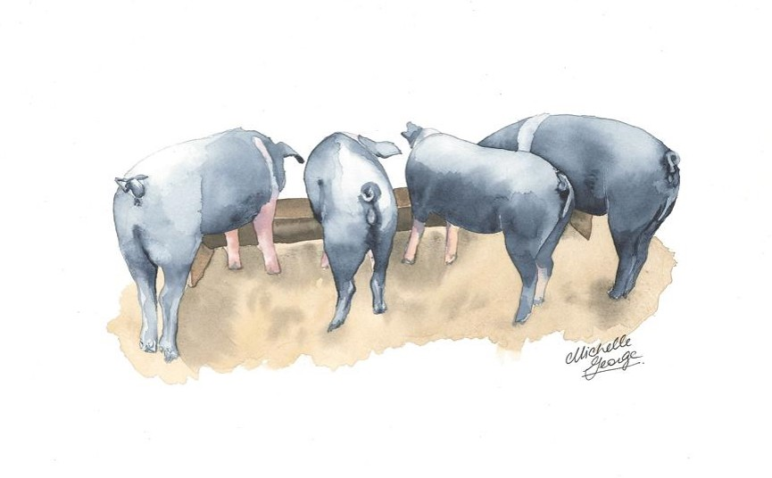 Pigs' butts