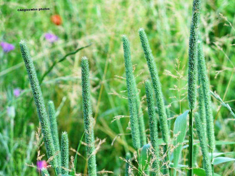 Wild Flower Meadow, Feldbrunnen