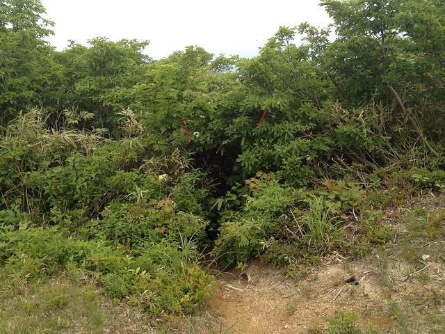 貝月山 ふれあいの森ルート