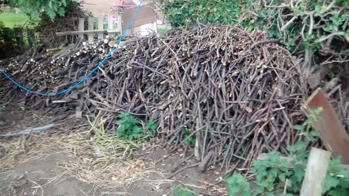 firewood July 16 (2)
