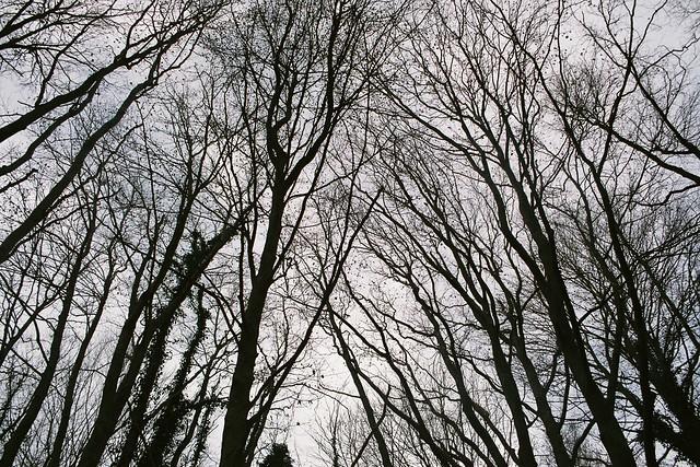 El cel i les branques d'hivern