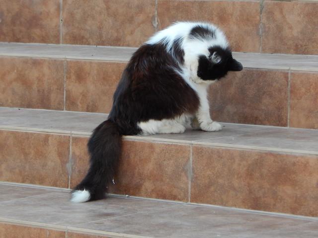 кот, который живёт на автобусной остановке | horoshogromko.ru
