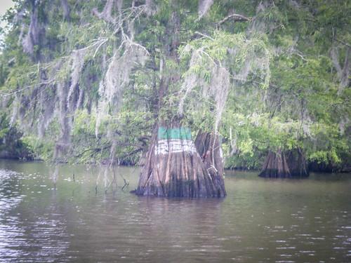 Sparkleberry Swamp-123