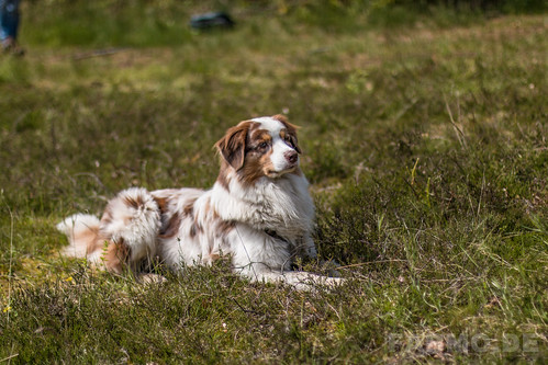 Hunde KW 22 2015 | by GuinTheReal