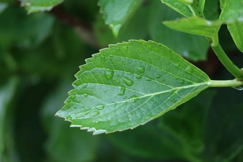 a Leaf in Rain