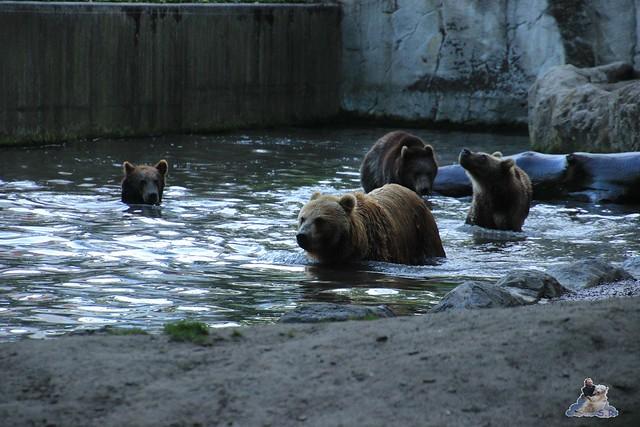 Tierpark Hagenbeck Dschungelnacht 06.05.2015   129