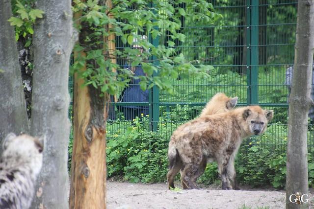 Tierpark Friedrichsfelde 10.05.201528