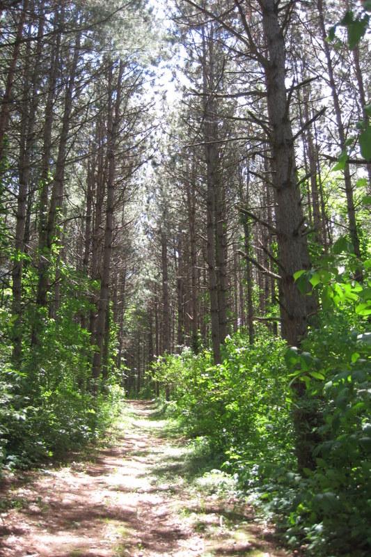 trails (5)