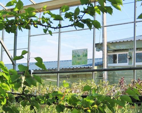 Secret Herb Garden, Old Pentland