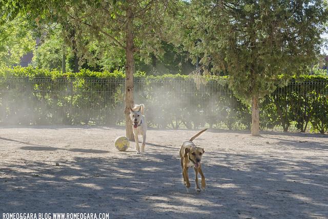 Parque para perros en el parque de la Canaleta, Mislata